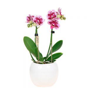 Exclusive pink Bowl pot