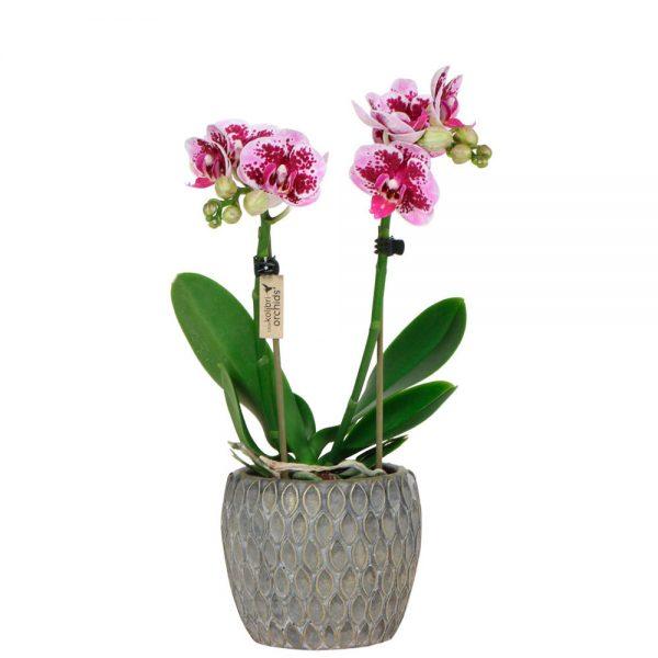 Exclusive pink Marrakesh grey pot